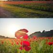 夕日に染まる真っ赤なポピー畑を見て来ました。byきつれ川ポピーまつり
