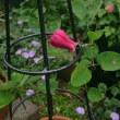 春の庭   2017  その2