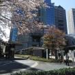 東京の桜も終わりですね。