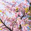 春は若狭の海からやってくる By空倶楽部