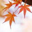 秋いろものがたり(Ⅱ)