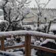 やっぱり大雪でした…♪