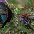 ♬ ♪  花の命は短いけれど 蝶の命もはかなくて  ♬ ♪