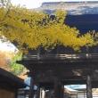紅葉狩り カラフル カラフル 霊松寺 (菜人)