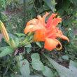 花のいのちは短い写真で残す