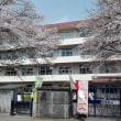 満開の桜が、新一年生をお迎え