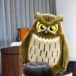 シマフクロウと人間 Blakiston's Fish Owl