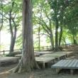太平山・夏