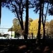 晴れた日の森の図書館周辺