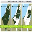 """現イスラエルが不法占領している原産地パレスチナの有機栽培「一番搾り」オリーブオイル/Organic """"First Squeeze"""" Olive Oil from Palestine of Origin"""