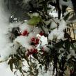 南天の実に雪化粧