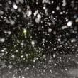 ドックに行ってきた&また雪だよ