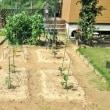 ミニトマト&なすを植え付けましたぁ~!