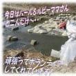 富山のブリエビ塩ラーメン、むちゃブリで(笑)&冬の川のゴミ拾い&サカマキガイ