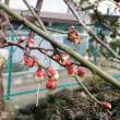 林稲荷神社初午祭