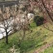 南岸の梅花とシャボン玉