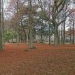 ヒマラヤスギの落葉が綺麗な、別府公園を散歩したんだ!