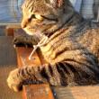 夕日を浴びる猫共。