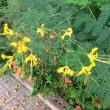 庭の植物  (復活物語)