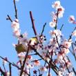 梅の花2・・・【いな】