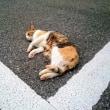 6月19日(火)のつぶやき よく猫に会う しかも逃げない 愛猫家 猫の飼い主 白猫ミルコ