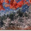 冬桜と紅黄葉Ⅴ