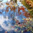 青い空に紅葉(もみじ)落ちる ~ モネの庭から(その304)