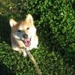 番犬ニアラズ