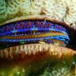 Nikon Freak129. 名称不明の貝