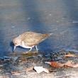 貯水池の鳥さん