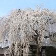 京都へ 春編