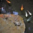 池の同居者たち