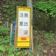 ぶらり散策Ⅱ(大きくなりすぎた水芭蕉)