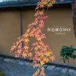 荻江節@一条恵観山荘【秋色鎌倉2018】色づく秋の鎌倉で