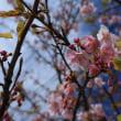黄色とピンクで春爛漫 ♪