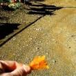大人気の田舎の干し芋