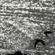 干潟のチュウシャクシギ
