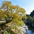 紅葉~猿飛千壺峡