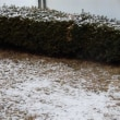 大阪に雪が降った