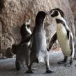 ペンギンと野鳥と。今年もよろしくお願いします▪長崎ペンギン水族館