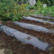 秋冬野菜準備-マルチシート張り