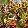 山道の木の実たち 1