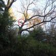 工作した巣箱を裏山の桜に取り付け