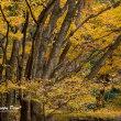 ふんわり黄色をまとった木