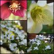 3月庭の花