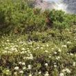 硫黄山(アトサヌプリ)地球の鼓動を感じる山🌋