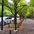 秋のいちょう並木