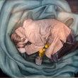 ■第56回北星学園女子中学高等学校 美術部 はしどい展■第12回はしどいOG展■第4回写真同好会校外展 (2019年2月5~10日、札幌)