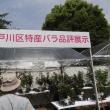 江戸川区バラ展