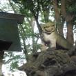 西船橋近くの春日神社